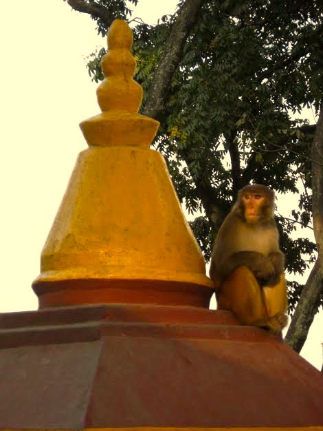 "Mellow Buddhist saffron yellow at the ""Monkey Temple,"" Kathmandu, Nepal"