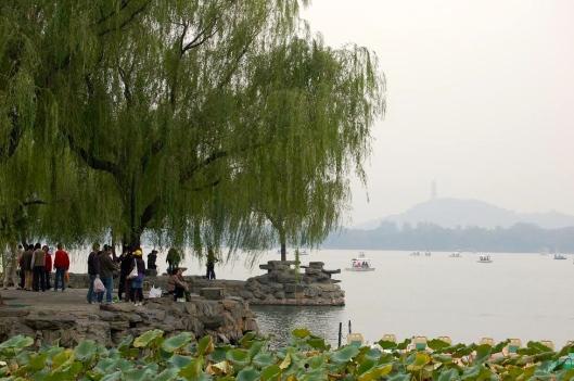 Willow tree, Summer Palace, Beijing, China